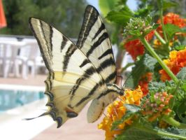 Butterfly by Andrex91
