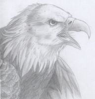 Eagle portrait by Retromissile