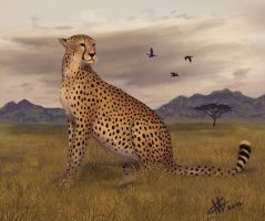 Cheetah by GrayOwl