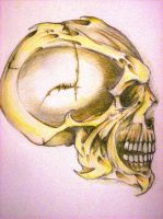 pointed skull by RottenRoo