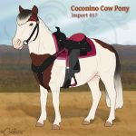 Coconino Cow Pony - Import 017 (SOLD) by daggerstale