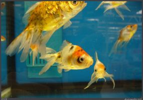 Fish Stock 0055 by phantompanther-stock