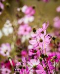 End of the summer blooms by kayaksailor
