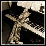 The Cat's Melody by Hiki-Hiki