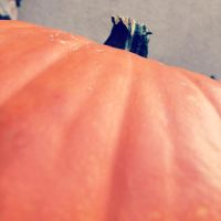 The Great Pumpkin by Madylyne