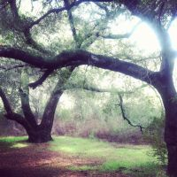 Trees by Rosabella23