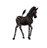 Zebra Foal Png Stock 2 by Direwrath