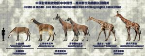 Giraffe in Middle~Late Miocene Mammalian by sinammonite