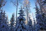 heart of winter by Puuronen