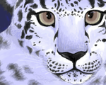 Snow Leopard by MikahLah