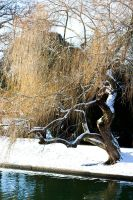 Weeping Willow on the Snow by HMSpeedFreek