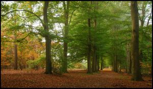 Another October forest walk by jchanders