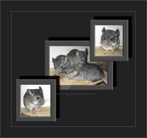 My Chinchillas-Babys Nr.002 by Travail-de-lame