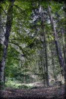 Trees panorama by MattHalic