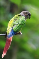 parrot by PeacePhotoMan