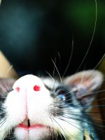 Nosey Possum by cakecrumbs