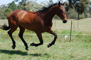 183 WB Galloping full suspensi by Chunga-Stock