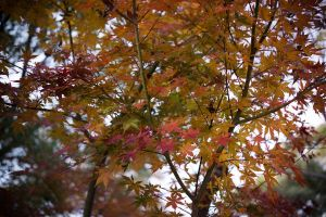 Red leaves by feria233