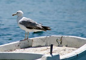Seagull by agelisgeo
