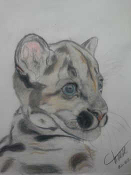 Baby Puma by cheese6623