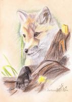 EAP Mar : Red fox by silk501