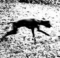 dog running by birgzett