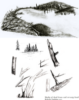 Study of dead trees and swamp land by beyourpet