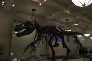 T-Rex by TheBuggynater