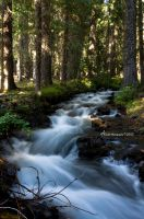 Pacific Trail Creek by ainsliehubert