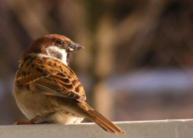 My best photo of a sparrow by LadyAyslinn