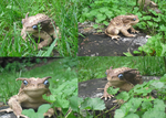 Blue Eyed Toad Natural Habitat by Eryrb