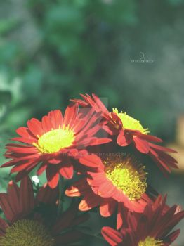 Red Flowers by treatme