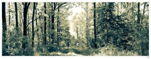White Forrest by Riffo