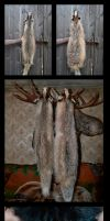 Moutable european badger pelts by WoroTax