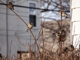 Wintering Finches 03 by tmfNeurodancer