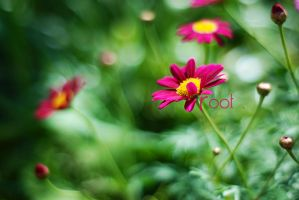 152 by rootkit0