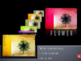 Wallpaper pack Flower by 365art