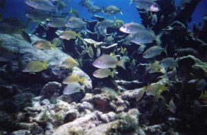under the sea3 by dlc-nature-stock