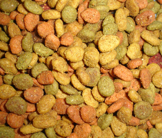 texture - dog food 009 by brookeasaurr