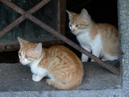 Cats by aperfectissue