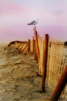 Assateague VI by touch-the-flame