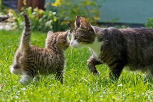 Cat and kitten by attomanen