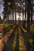 Good Morning Forest II by FilipR8