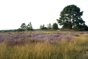 heath landscape september 2012 by Nexu4