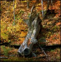 Tree in stream.img650 by harrietsfriend