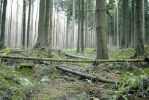 Forest Stock 9 by Sed-rah-Stock