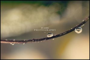 Raindrops and Bokeh II by AniekPhotography