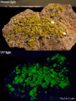 Autunite, UV vs normal light by Haleryan