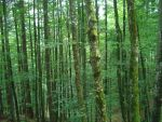 Forest Stock - 06 by VampireSybelle-Stock