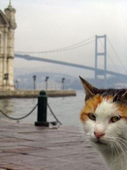 istanbul memory of a cat by deepestwonder